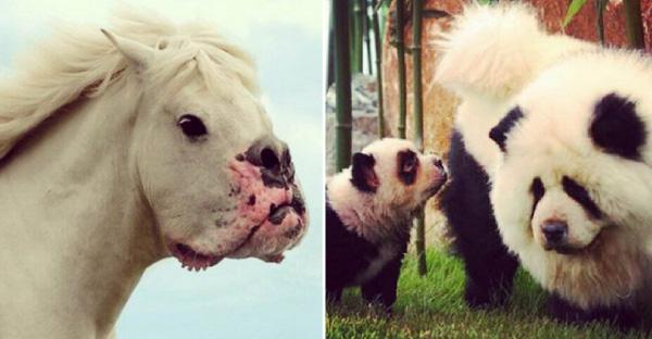13 หมาที่ดูไม่เหมือนหมา แล้วพวกมันจะเหมือนอะไรกันบ้าง