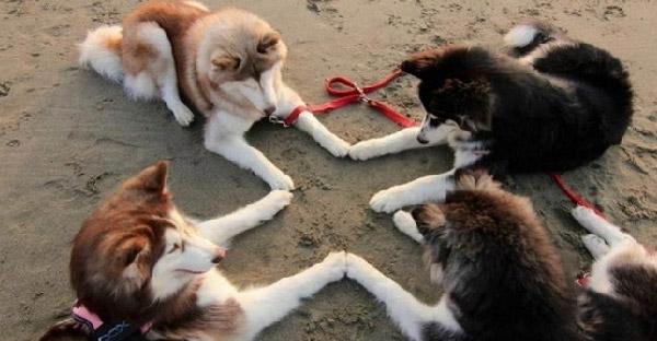28 ภาพที่ไม่สามารถอธิบายได้ว่า เจ้าหมาตัวดีคิดอะไรอยู่ ถึงทำแบบนั้นลงไป