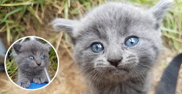 ชายหนุ่มตั้งใจไปตกปลา แต่ดันได้ลูกแมวนัยน์ตาสวยกลับบ้านไปเลี้ยงแทน