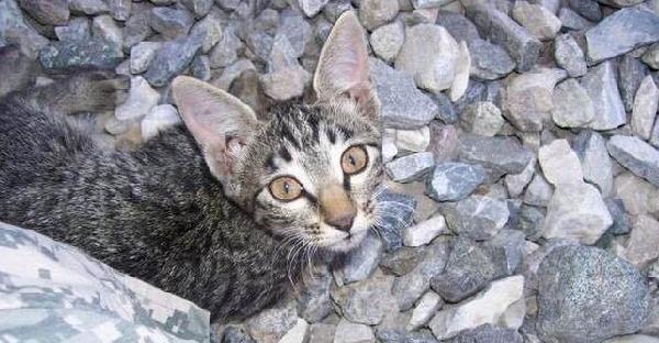 ทหารหญิงพบลูกแมวท่ามกลางสงคราม พอรับมาเลี้ยงถึงรู้ว่ามันผิดปกติทางสมอง