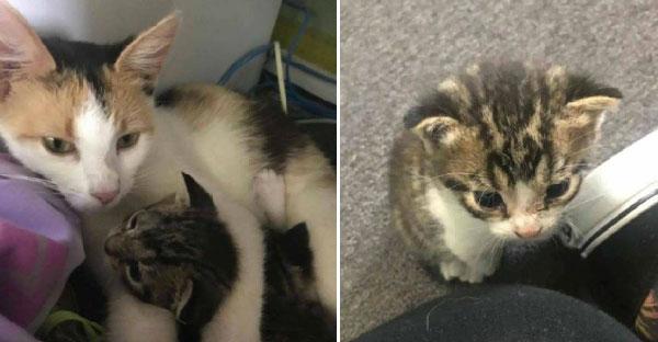 แม่แมวจรคาบลูกมาให้สาวดูแล แถมยังนำทางไปหาลูกอีกตัว ดูแลให้ครบทั้งครอบครัว!!