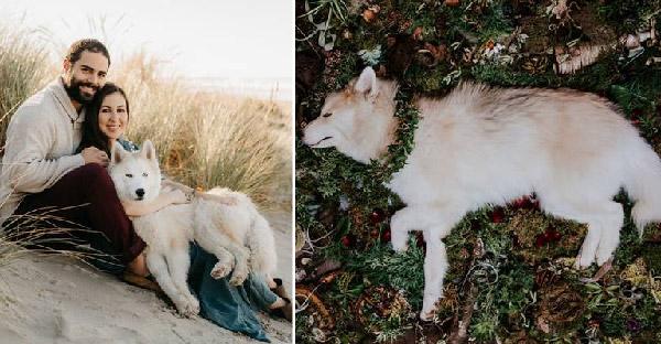 เมื่อหมาสุดรักกำลังจะจากไปด้วยโรคสมองเสื่อม เจ้าของจึงทำอัลบั้มภาพสุดซึ้งก่อนจะจากกัน