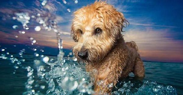 การประกวดภาพถ่ายสุนัขยอดเยี่ยม Kennel Club ที่จะทำให้คุณทึ่งกับผลงานชิ้นเอก