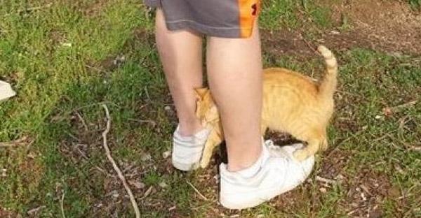 แมวส้มท้องแก่คลอเคลียขาจนเคลิ้ม พอมนุษย์รู้ตัวอีกทีพาขึ้นรถกลับบ้านไปเลี้ยงซะแล้ว