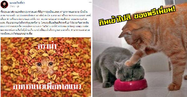 ดราม่าอาหารแมวเพื่อทาสแมว ถึงมือแหม่มโพธิ์ดำแล้ว!!