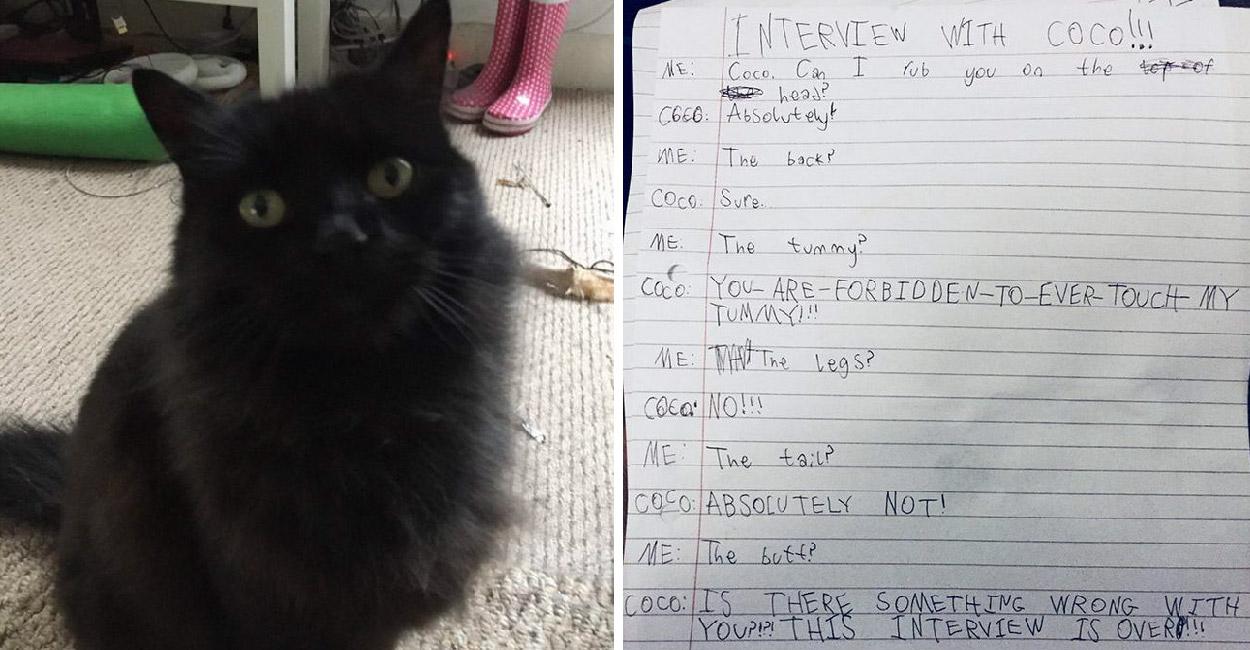เด็กน้อยจัดสอบสัมภาษณ์แมวของเธอ จนได้คำตอบสุดฮาทำเอาชาวเน็ตขำกระจาย