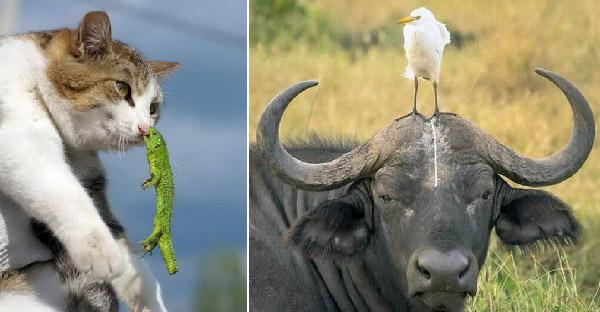 27 ภาพสัตว์โลกกับความผิดพลาดแบบไม่ตั้งใจ จนเกิดเป็นความเฮฮาคูณสอง