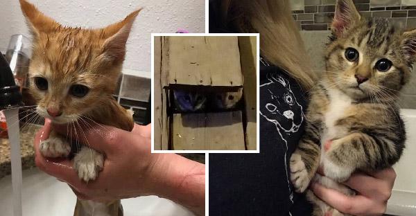 ลูกแมวขี้ระแวงซ่อนตัวในเล้าไก่ จนสาวใจดีซุ่มจับตัวและพามาชุบเลี้ยงดูแลอย่างดี