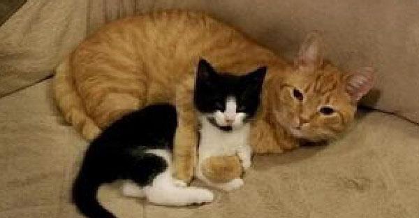 ทาสแมวช่วยลูกแมวจรหาบ้านให้ แต่เจ้าแมวส้มกลับทำท่าอยากจะเลี้ยงเองซะงั้น