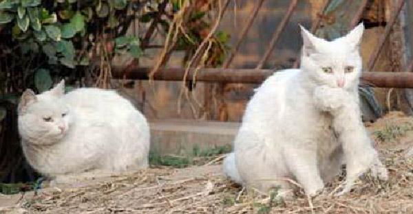 แม่แมวจรหนีไปออกลูกลำพังและไม่ยอมให้เข้าใกล้แม้กระทั่งพ่อแท้ๆ จนทุกอย่างสายเกินไป