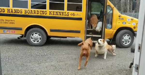โรงเรียนสุนัขเปิดบริการรับส่งด้วยรถโรงเรียนสีเหลือง จนมีผู้โดยสารและลูกค้าติดหนึบกันตรึม!!