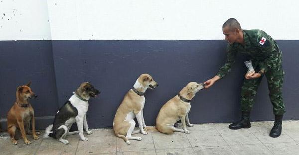 ทหารหนุ่มใจบุญรับเลี้ยงหมาไร้บ้าน จนกลายเป็นคุณพ่อเหล่าน้องหมาระเบียบเป๊ะ