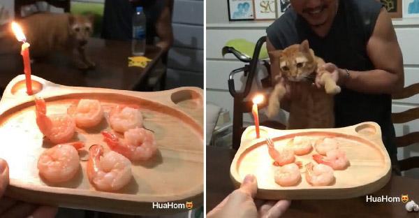 เมื่อชาวเน็ตเซอร์ไพรซ์วันเกิดแมวส้มได้น่ารักสุดๆ