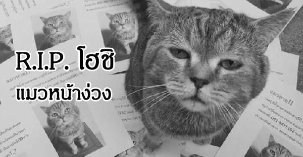โฮชิ แมวหน้าง่วง เสียชีวิตกระทันหัน ชาวเน็ตแห่ไว้อาลัยสุดเศร้า
