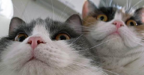 16 ภาพแมวเหมียวที่จะแฮ็คคอมพิวเตอร์ของมนุษย์ แต่ดันพลาดถูกจับภาพไว้ได้ซะก่อน
