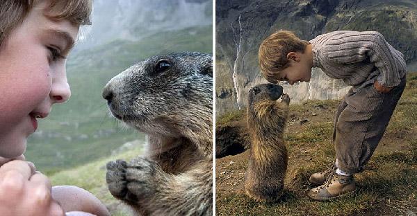 เด็กน้อยวัย 4 ขวบกลายเป็นเพื่อนซี้กับฝูงมาร์มอตแห่งเทือกเขาแอลป์