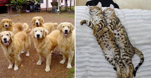 มัดรวมภาพสัตว์เลี้ยงหน้าตาเหมือนกันราวฝาแฝดอย่างกับก๊อปวาง