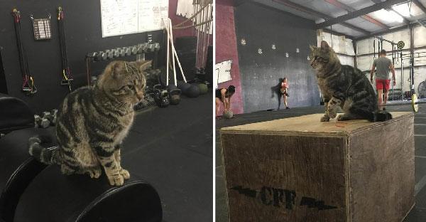 แมวจรเดินดุ่ยๆเข้าโรงยิม ไม่ได้มาเล่นฟิตเนสหรอกนะ แต่จะมาจับมนุษย์เป็นทาสต่างหาก