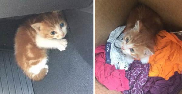 ตำรวจปิดถนนทั้งหมดเพื่อช่วยชีวิตลูกแมวจรจัดที่ถูกทิ้งบนทางด่วน
