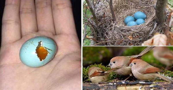 ชายหนุ่มพยายามหาคำตอบจากฟองไข่สีฟ้า ก่อนจะรู้ว่าเป็นของนกตัวน้อยชนิดหนึ่ง