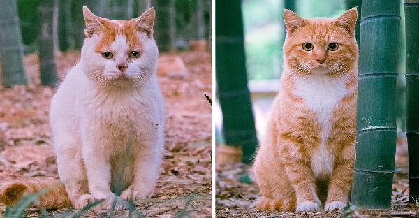 ช่างภาพเผยภาพแมวจรจัดในสวนสาธารณะ ทั้งน่ารัก อ้วนตั๊บ สวยจริง จนคนแห่ไปชมเพียบ