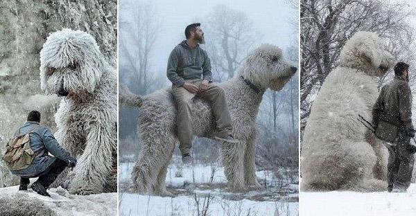 ช่างภาพสร้างสตอรี่เจ๋งๆ ด้วยการตัดต่อให้หมาตัวเท่ายักษ์ได้อย่างแนบเนียน