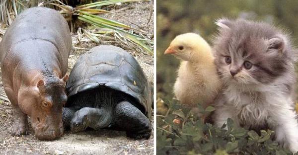 31 เพื่อนซี้ต่างสายพันธุ์ กับมิตรภาพอันน่าเหลือเชื่อระหว่างสัตว์โลก