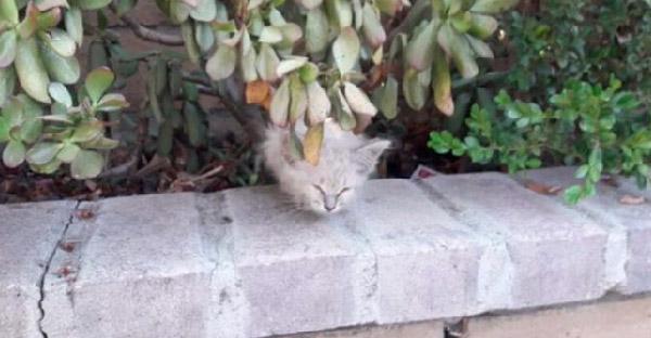 ลูกแมวตัวน้อย โผล่หัวออกจากพุ่มไม้ ร้องเรียกหาคนช่วยชีวิตได้ถูกจังหวะพอดี