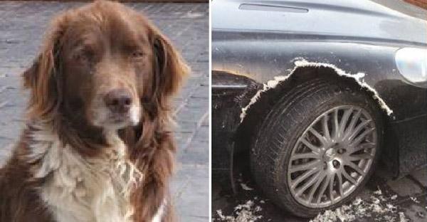 สุนัขกัดรถหรูกระจุย เพราะรู้ว่าเจ้าของกำลังวางแผนหักหลังมัน