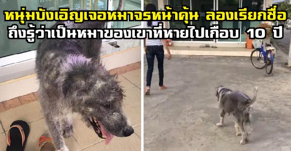 หนุ่มบังเอิญเจอหมาจรหน้าคุ้น ลองเรียกชื่อถึงรู้ว่าเป็นหมาของเขาที่หายไปเกือบ 10 ปี