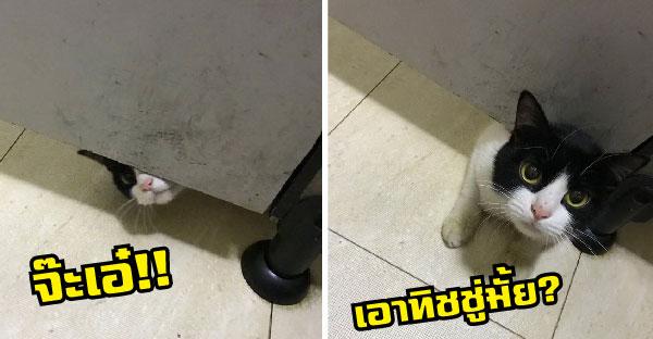 เจ้าเหมียวอยากรู้ว่าเจ้าของแอบมาทำอะไรในห้องน้ำ เวลาส่วนตัวหมดแล้วตั้งแต่เป็นทาสแมว
