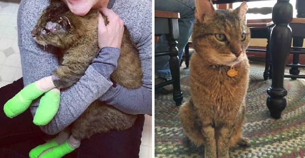หญิงสาวได้รับโทรศัพท์จากรพ.สัตว์ เพราะพบแมวของเธอที่หายไปนานกว่า 10 ปี