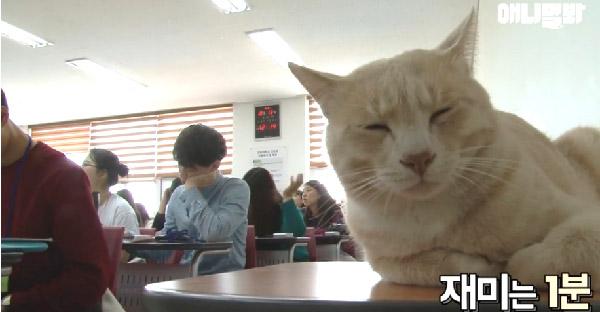 เหมียวเกาหลีขาใหญ่ในรั้วมหาลัย ที่นักศึกษาทุกคนล้วนเกรงใจและปรนเปรออย่างดี