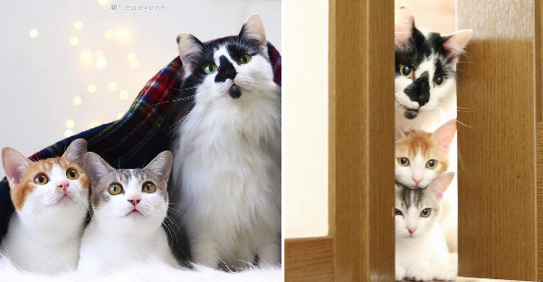 ลูกแมวกำพร้าทั้งสองได้ความรักจากพี่เหมียวหนุ่ม ที่จะไม่ปล่อยให้โดดเดี่ยวต่อไป