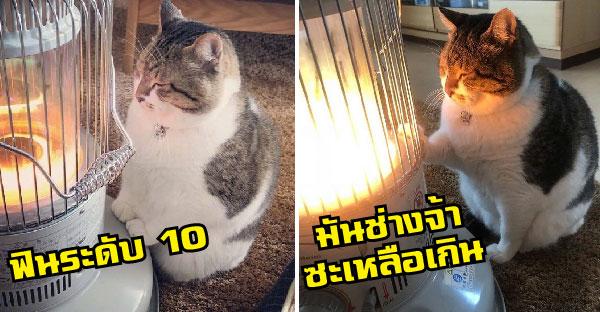 พารู้จัก Hayabusa แมวอ้วนน่ารัก ฉายาพี่แกไม่สมกับตัวเอาซะเล๊ยยยยย