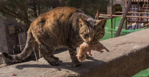 แม่แมววัดคาบลูกวิ่งหาคนช่วยลูกตัวน้อย แต่ทุกอย่างสายเกินไป ทำเอาคนเห็นถึงกับน้ำตาซึม