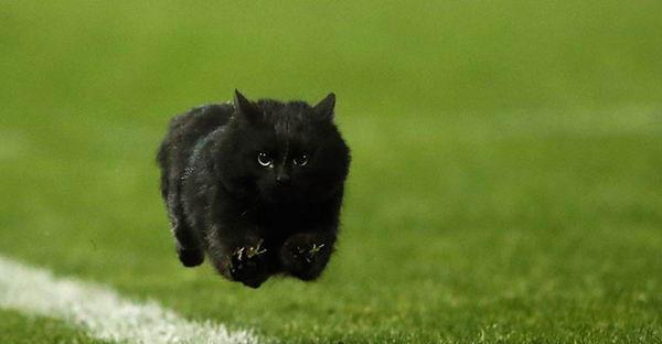 เมื่อแมวดำกระโดดลงไปในสนามรักบี้ จึงกลายเป็นจุดเริ่มต้นของการตัดต่อสุดฮา