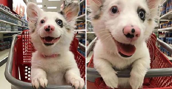 เมื่อลูกหมาน้อยพบของโปรดในซุปเปอร์ จึงแสดงสีหน้าตื่นเต้นดีใจจนออกนอกหน้า