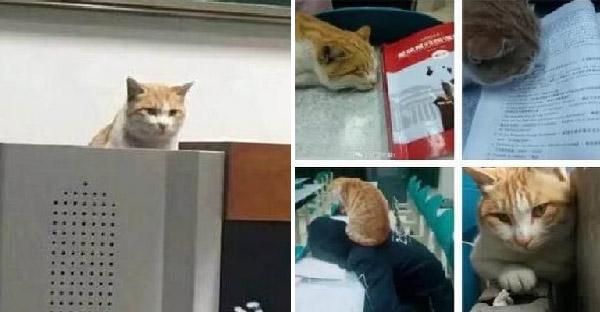 แมวจรจัดโผล่มาช่วยคุมสอบ หลังจากนั้นก็ยึดห้องเรียนเป็นบ้านซะเลย