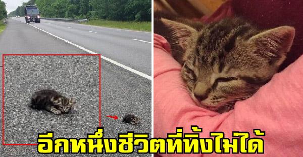หญิงสาวกลับรถสวนทางจนโดนใบสั่ง เพื่อกลับไปช่วยลูกแมวที่ถูกทิ้งอยู่ข้างถนน