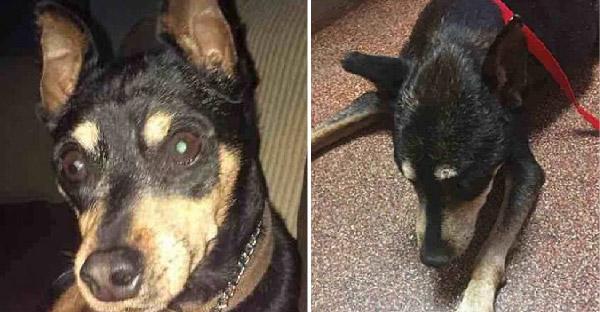เจ้าของตัดสินใจการุณยฆาตสุนัขป่วยเรื้อรัง แต่ทีมสัตว์แพทย์สงสารเลยขอช่วยไว้เอง
