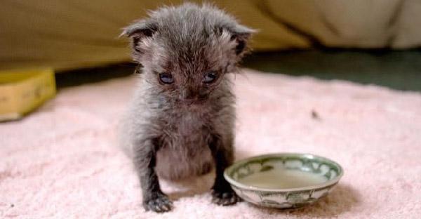 สาวพบลูกแมวจากข้างถนน ช่วยเลี้ยงดูจนเติบโตกลายเป็นแมวดำสุดเท่