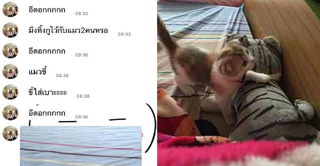เมื่อสาวฝากแมวไว้กับเพื่อน 2 ต่อ 2 จึงเกิดเป็นเรื่องราวฮาๆขึ้น