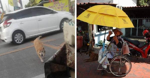 เจ้าแดงหมาแก่อายุ 16 ปี ข้ามถนนมาขอข้าวคุณยายกินทุกวันเพราะเหตุผลที่ชวนน้ำตาซึม