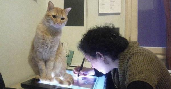 15 ข้อที่จะพิสูจน์ว่าคุณเป็นทาสแมวตัวจริงหรือไม่