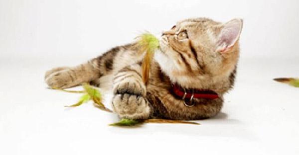 12 ความลับเล็กๆที่เหล่าสัตว์เลี้ยงอยากบอกให้คุณรู้ไว้