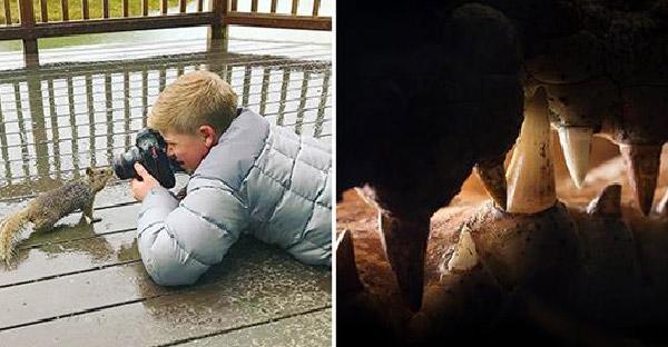 ลูกชาย Steve Irwin ชนะเลิศช่างภาพยอดเยี่ยมในวัยเพียง 13 ปี และภาพเหล่านี้คือเหตุผลทั้งหมด