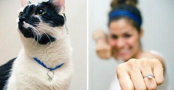 12 สัตว์โลกที่เป็นสื่อรักแทนใจ ให้การขอแต่งงานซาบซึ้งและโรแมนติกสุดๆ
