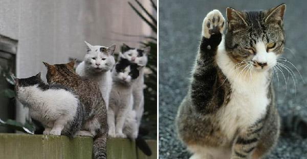 ช่างภาพชาวญี่ปุ่นเผยภาพชีวิตแมวจรจัด ในมุมมองแปลกตาที่หลายคนไม่เคยเห็นมาก่อน