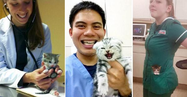 มัดรวมภาพคุณหมอและพยาบาล ที่ทำงานกับลูกแมวน้อยทุกวันว่าฟินกันขนาดไหน!!